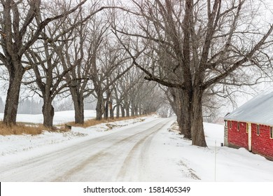 Vermont Red Barn In Snow