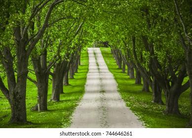 vermont tree tunnel