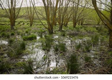vernal view swamp in Nebrodi Park, Sicily