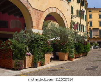 Verona, Italy - 6/8/2018: Leafy green potted plants around a restaurant in Verona, Veneto, Italy giving privacy to the tables from people passing in the street