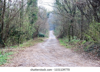 Vertemate con Minoprio, Como, Lombardy / Italy - March 18 2017: Path in the woods.