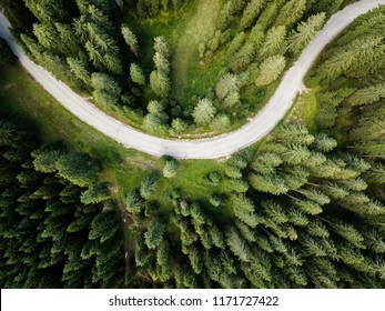Vertical aerial view of spruce and fir forrest (trees) at Pokljuka, Julian Alps, Slovenia.