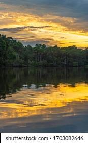 Vertical Amazon Rainforest Sunset Reflection inside Yasuni national park, Ecuador.