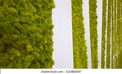 Vertical art installation from live moss in the room. Stabilized moss in the interior. White and green background