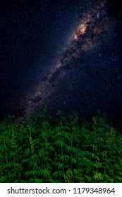 Vertical beautiful landscape with green cannabis field against night sky and Milky Way. Green marijuana (hemp) growing. Symbol of legalization of marijuana