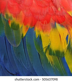 Vertical of Beautiful red, yellow and blue texture of Scarlet macaw parrot bird's wing feathers