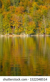 VERTICAL: Breathtaking view of forest with turning leaves reflected in the lake. Picturesque shot of a serene pond by the colorful woods in the peak of autumn. Breathtaking shot of fall colored nature