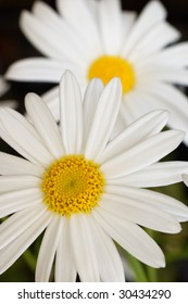Vertical close up shot of two daisies. Focus on foreground daisy.