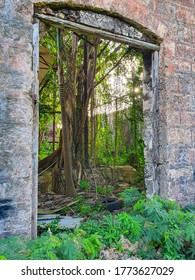 VERTICAL, CLOSE UP: Window offers a view of fascinating lush green interior of abandoned factory overgrown with tropical greenery. Entrance to decrepit industrial building filled with exotic greenery.