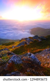 vertical colorful sunrise summer landscape, blossom flowers on slope of mountain between stones on background foggy valley under sun rays of sunrise, picturesque morning nature image, Europe travel