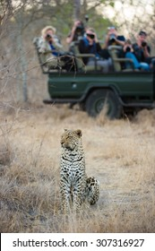 A vertical, colour photograph of a group of onlookers on a safari vehicle watching and photographing a leopard sitting in tall dry grass at Elephant Plains, Sabi Sands Game Reserve.