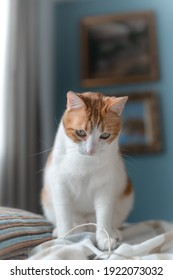 vertical composition. Brown and white cat sitting on a blanket
