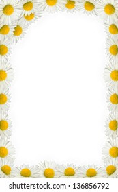 Vertical daisies frame on the white background