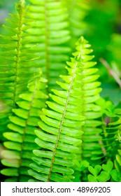 vertical ferns
