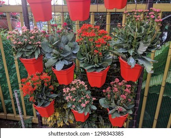 Vertical flower garden with potted Kalanchoe flowers (Widow's-thrill)