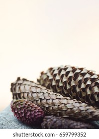 vertical front view of pine cones of different colors and sizes with selective focus and copyspace