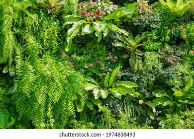 Vertical garden, Beautiful nature background of plant at office wall with tropical green leaf mix in the city.