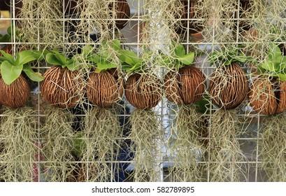 vertical garden by spanish moss