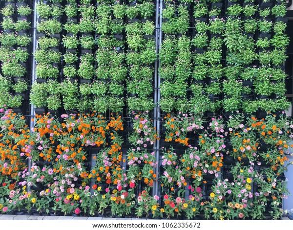 Vertical garden decoration