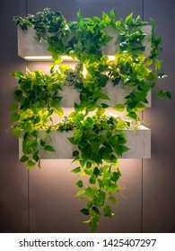 Vertical garden green ivy in wall hanging wooden pots or racks with warm white color LED lighting. Interior decoration make fresh and warm atmosphere.