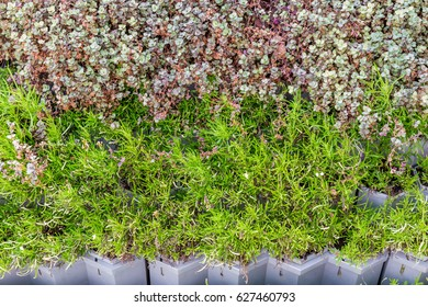 Vertical garden, green plants growing on wall background, trendy ecology concept.
