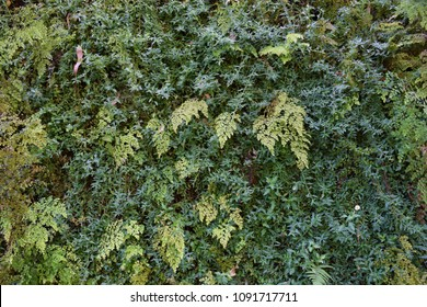 Vertical garden living flower and fern wall replica