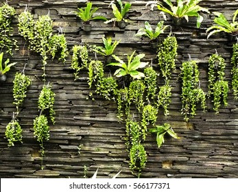 Vertical garden on rock brick wall texture background