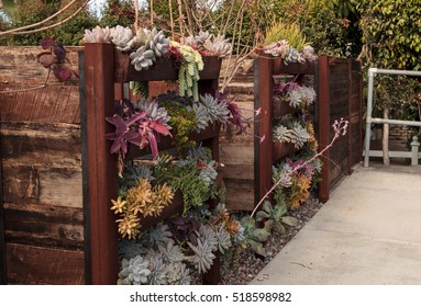 Vertical garden planted wall with shelves to hold multiple green and red succulent plants.
