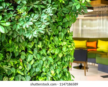 Vertical garden planting on wall decoration with blurry colorful furniture