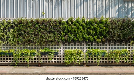 Vertical garden and shadow in sunny day