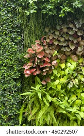 vertical garden texture wall