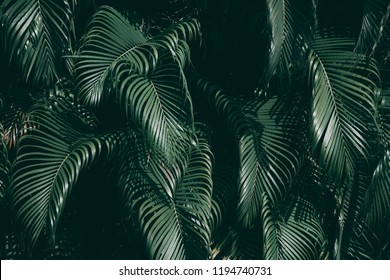 Vertical garden with tropical green leaf, Dark tone