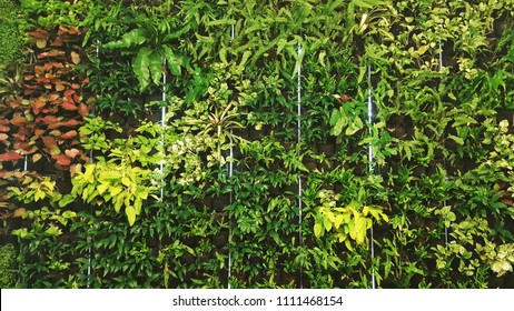 Vertical Garden with Variety of Trees