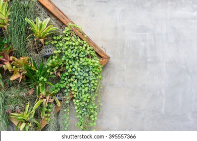 Vertical Garden In A Wooden Planter Box At The Wall