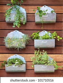 Vertical gardening concept. Plants in a mail box