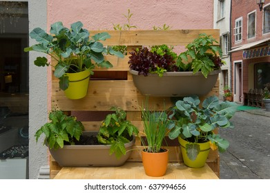 vertical gardening with a pallet tray