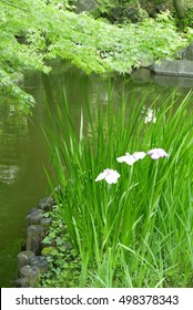 Vertical green tree, plant and water pond in the Japaneese backyard