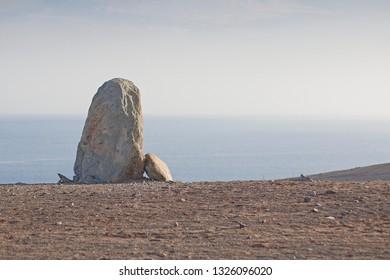 Vertical grey rock.