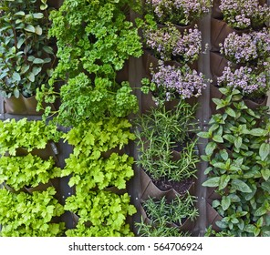 Vertical herb garden in an urban patio