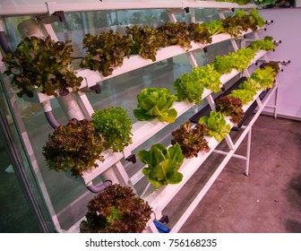 Vertical hydroponic gardening soilless system