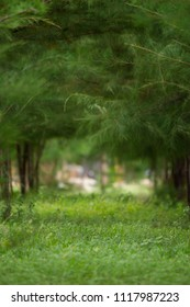 Vertical image of Forest pine tree background. Depth of field.