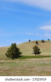 Vertical image of green rolling hills, blue cloudy skies and Western Cedars (Western Junipers), in Antelope, Oregon, USA.