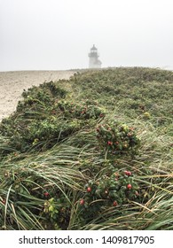 A vertical image of long grass with a lighthouse in the distance in Nantucket, Massachusetts.