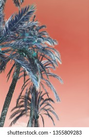 Vertical image of palm tree foliage closeup against dusty orange sky background