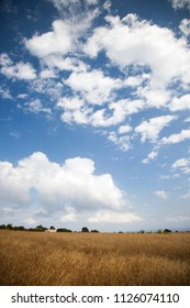 Vertical landscape of a leafy meadow and an expressive blue sky with clouds