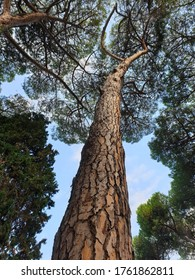 A vertical low angle shot of a tall tree in the forest