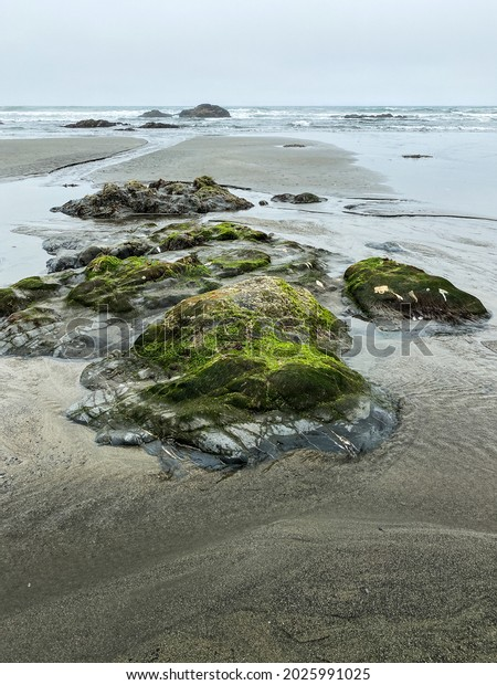 a vertical low view of low tide ocean beach with rock formations and reflections and lush mist sea moss