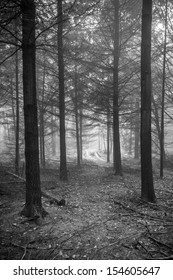 Vertical monochrome shot of a track going through a scary, fairytale-like autumn forest covered in fog