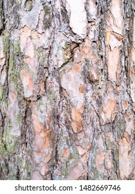 vertical natural background - bark of old pine tree (scotch fir, pine-tree) close-up