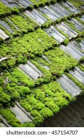 Vertical oblique moss roof.